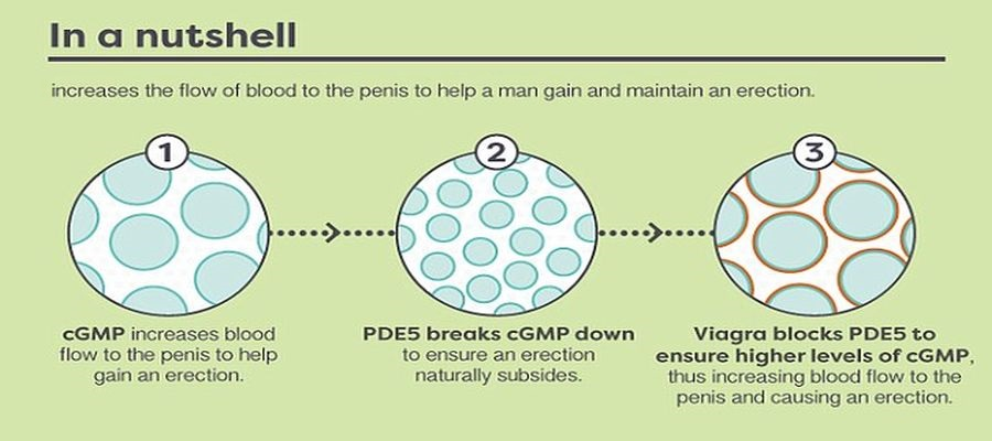 image explains how sildenafil works after consuming